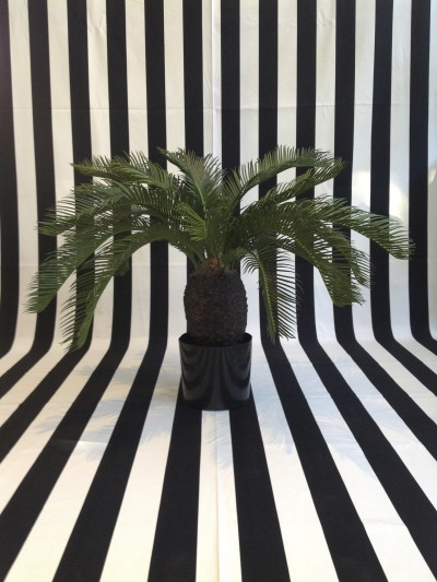 95cm Cycus Palm